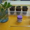 5月シフト、植物、食べ物。